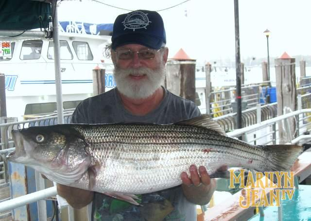 Striped Bass and Blues