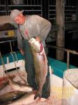 striped-bass-slaughter-007.jpgcfb6